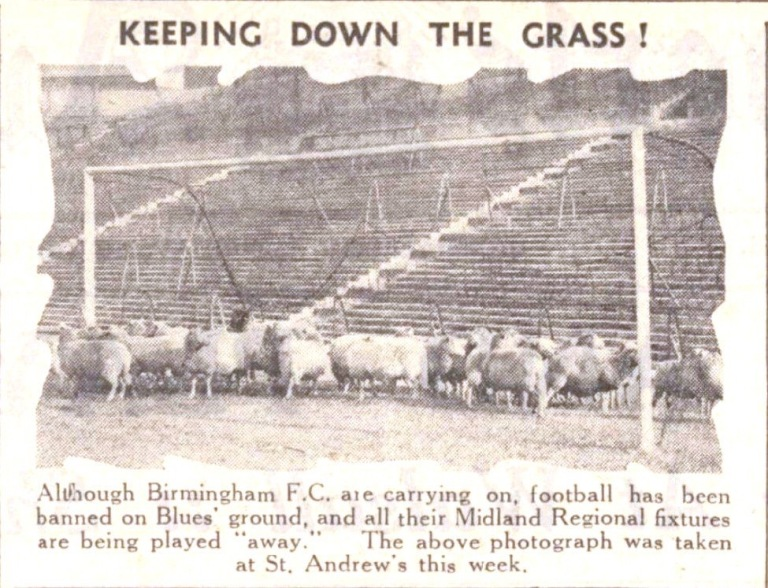 Sheep grazing at St.Andrews, home to Birmingham City